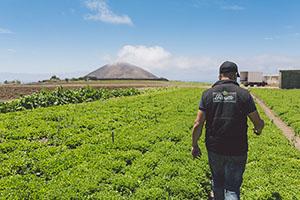 Cultivos de Florette en Canarias